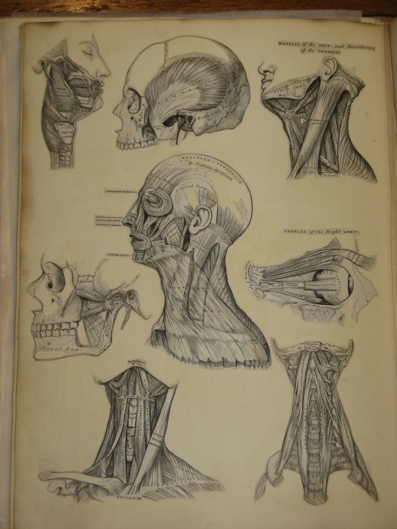 Henry Vandyke Carter (1831-1897). India Proofs for Anatomy, Descriptive and Surgical  by Henry Gray (1858).